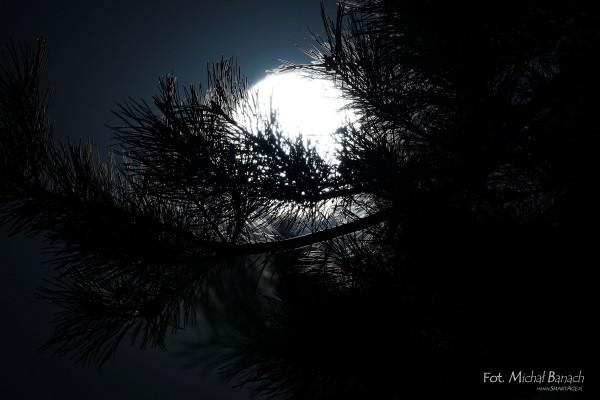 Superksiężyc - 29.08.2015 (fot. Michał Banach)