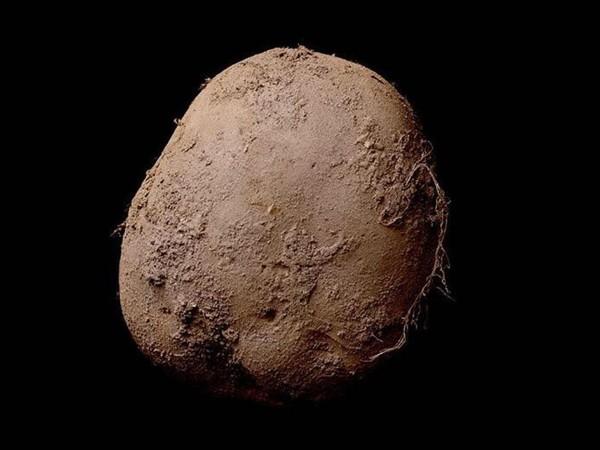 Irlandzki ziemniak - zdjęcie sprzedane za 1 mln dolarów (fot. Kevin Abosch)