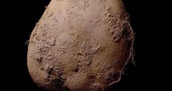 Zdjęcie ziemniaka warte 1 mln dolarów