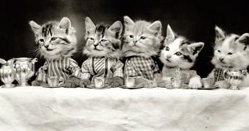 Harry Whittier Frees i jego koty - galeria