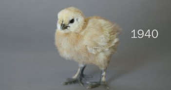 100 Years of Chick Beauty