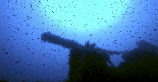 Wrak okrętu podwodnego HMS P311 (fot. Massimo Domenico Bondone)