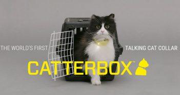 Catterbox - translator dla kotów