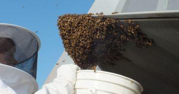 F-22 kontra pszczoły - nierówne starcie