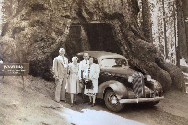 Wawona Tunnel Tree
