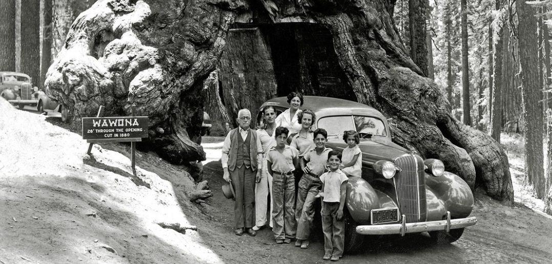 Wawona Tree - tunel w drzewie