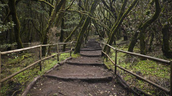 Park Narodowy Garajonay (fot. Diego Delso)