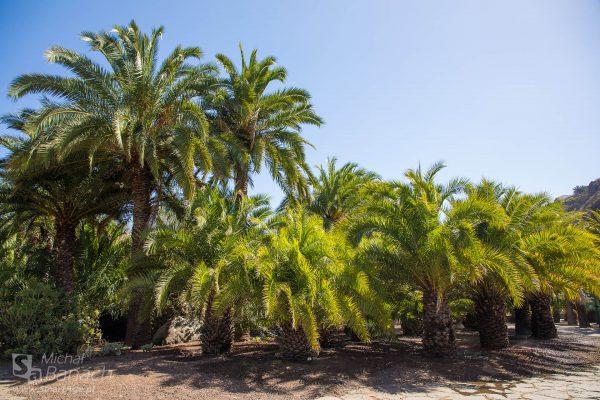Jardín Canario (fot. Michał Banach)