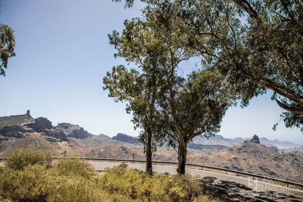 Charakterystyczne skały Gran Canarii - Roque Nublo (fot. Michał Banach)