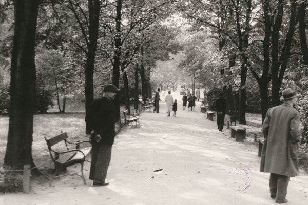 Alejka w Parku im. W. Bednarskiego (fot. MHK)