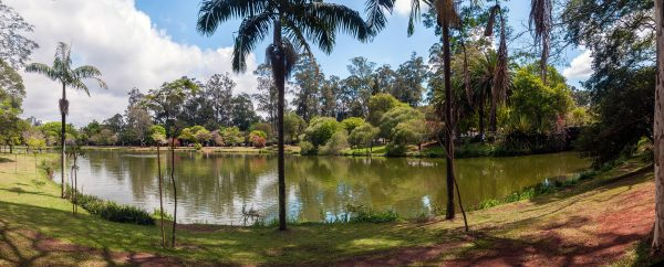 Ibirapuera Park, Sao Paulo, Brazylia (fot. The Photographer/Wikimedia Commons)