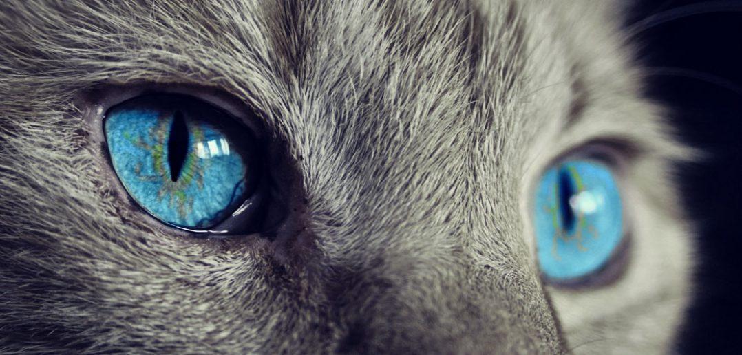 Czy kot widzi wszystkie kolory?