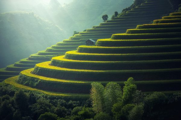 Plantacja ryżu na Bali (fot. pixabay.com)