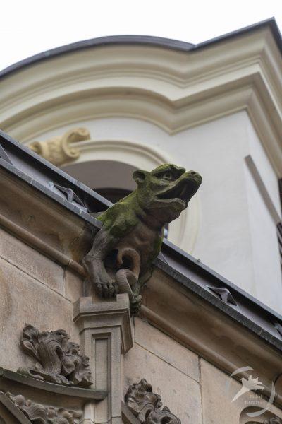 Rzygacz (fot. Michał Niemczyk)
